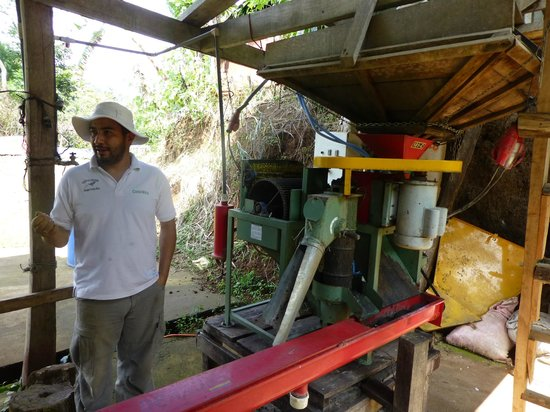 El Toledo Coffee Tour : Sorting machinery