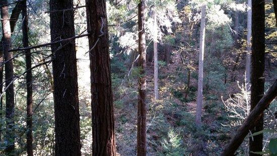 Eldorado National Forest: Nature's playground.