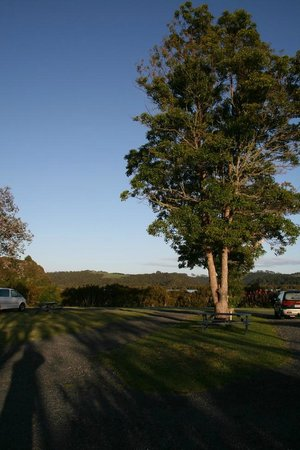 Waitangi Holiday Park: Morning sun at campsite