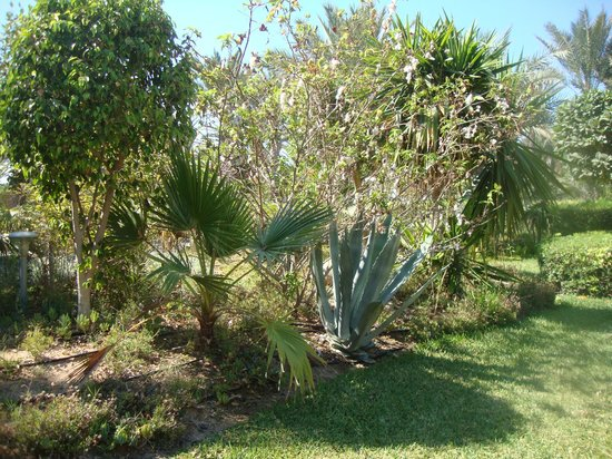 SENTIDO Djerba Beach : Le parc de l'hôtel... un jardin botanique à lui seul !