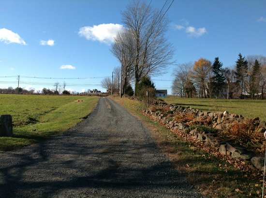 High Meadow Bed and Breakfast: Laneway into the property