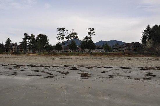 Ocean Village Beach Resort: Great Beach for Walking