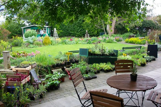 Beautiful Oasis Picture Of Garden Cafe At Restore
