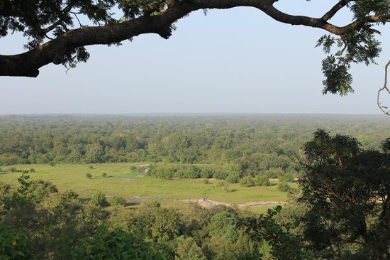Mole Hotel: View of the forested savanna