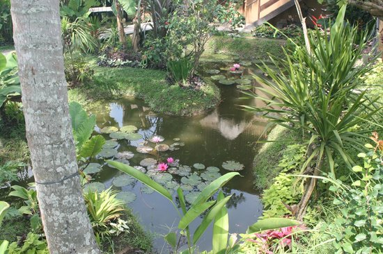Nirwa Ubud Homestay: nearby