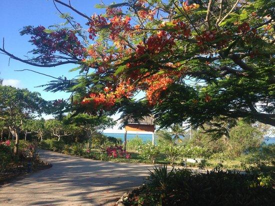 Melia Zanzibar: Gabi Beach Eingang