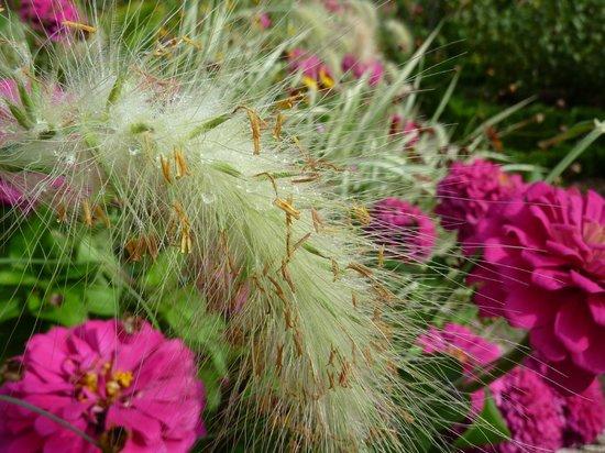 Jardin de l'Arquebuse : jolis parterres