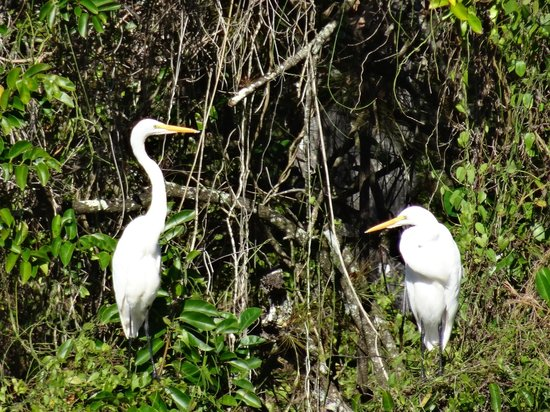 Six Mile Cypress Slough Preserve: birds