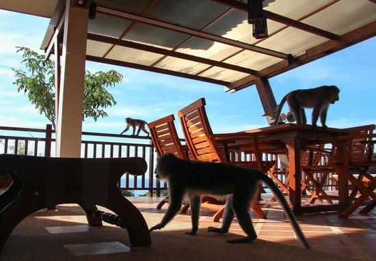 Baan KanTiang See Villa Resort (2 bedroom villas): Besuch auf der Terasse