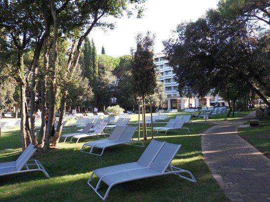 Hotel Eden: Il parco antistante l'Hotel a fianco della piscina.
