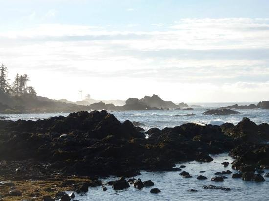 Black Rock Oceanfront Resort : a vista from the Wild Pacific trail which is steps from the hotel