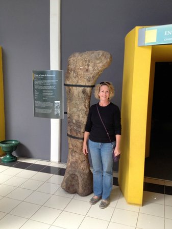 Museo Paleontologico Egidio Feruglio: Actual dino bone you can touch!