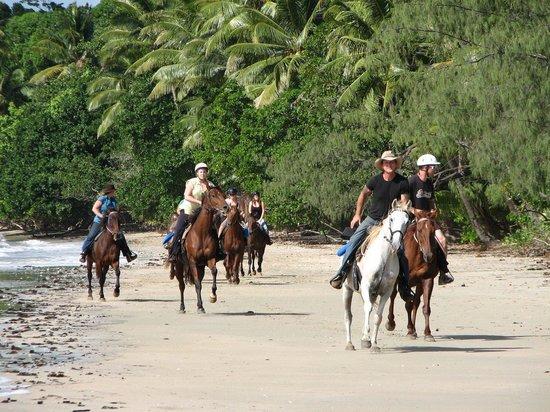 Cape Tribulation Horse Rides: beach riding at its best