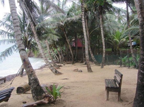 Casa Iguana : Beach at hotel