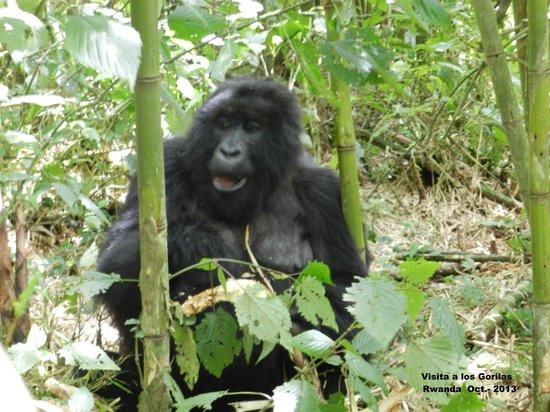 Ruhengeri, Rwanda: Visita a los gorilas