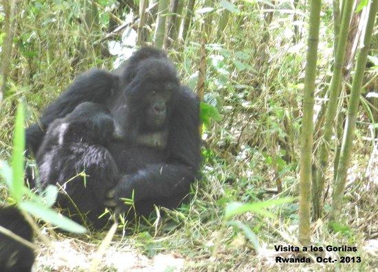 Ruhengeri, Ruanda: Visita a los gorilas