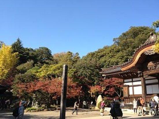 Jindai-ji Temple : 深大寺境内
