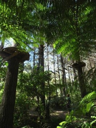 Whangarei, Nya Zeeland: New Zealand ferns canopy