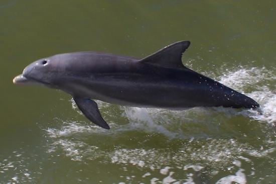 Double Sunshine Cruises: spelende dolfijnen langszij de boot