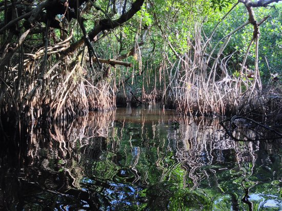 Tour the Glades - Private Wildlife Tours: In one of the tunnels