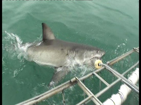 White Shark Ventures : Photo taken from a Video I captured