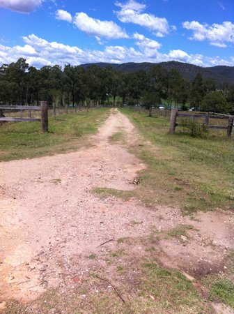 Bellbird and Swallows: Looking down the driveway.