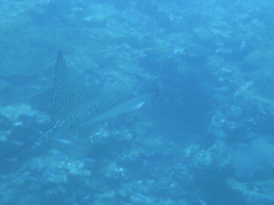 Koumac, كاليدونيا الجديدة: plongee Poum