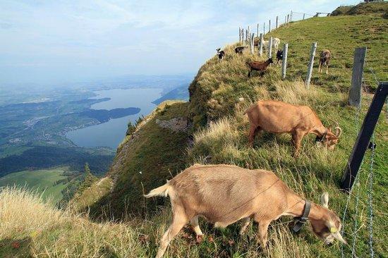 Mt. Rigi: top of Rigi