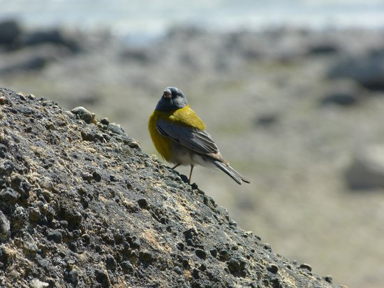 Walichu Caves: Algo de aves