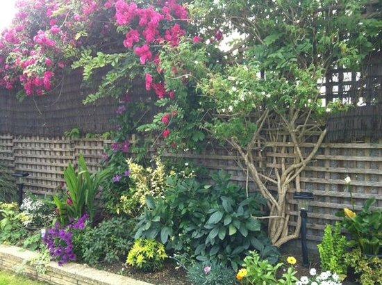 Limetree Nursery: Beautiful garden