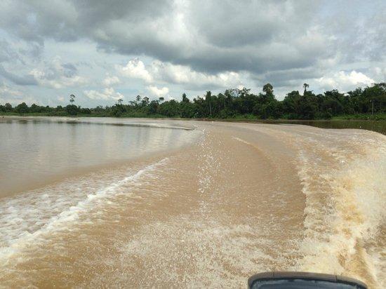 Kinabatangan River: Во время прогулки