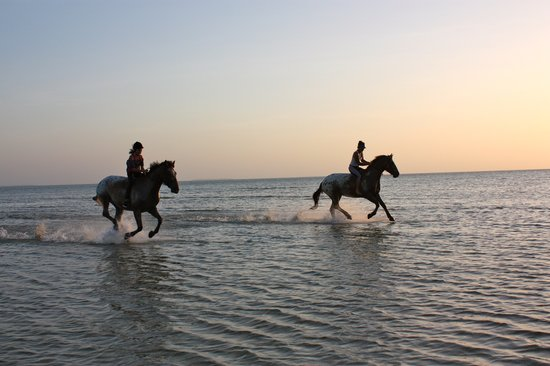 Sea Cliff Resort & Spa: Sunset beach rides