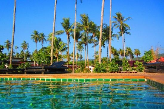 Coco Lanta Resort : palmiers