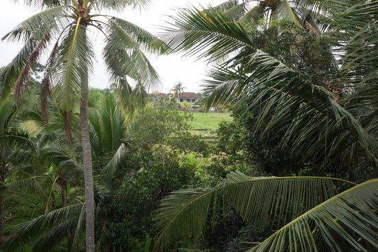 Champlung Sari Hotel: View from balcony