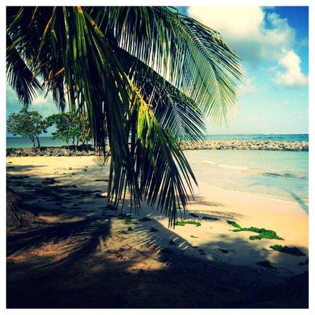 Dorado Beach: No words necessary... isn't beautiful!!