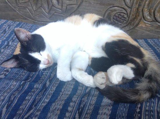El Viejo Danes Guest House : Cute cat