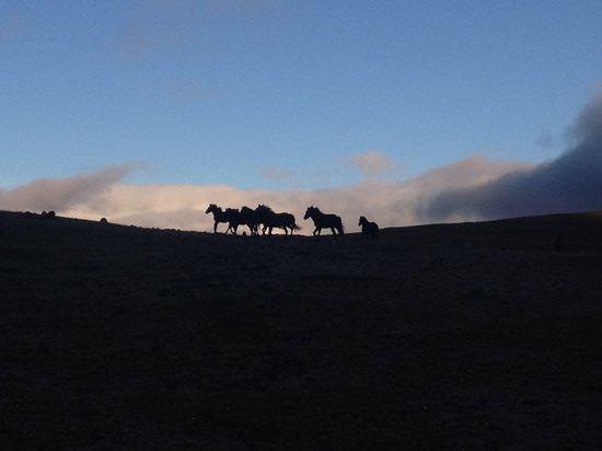 Hacienda La Alegria: Wild horses at the Andes