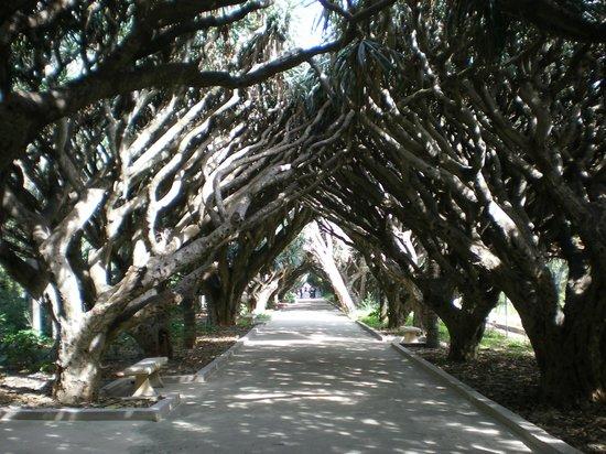 Le Jardin d'Essai du Hamma: Belle promenade à l'ombre