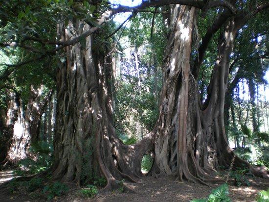 Le Jardin d'Essai du Hamma: On a envie de s'arrêter pour contempler chaque espèce.