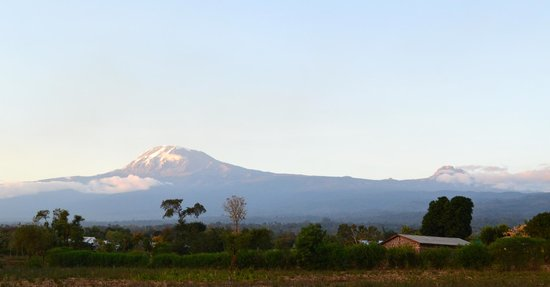 Kilimanjaro can been seen from Honey Badger Lodge on a clear day, pic taken outside hotel entran