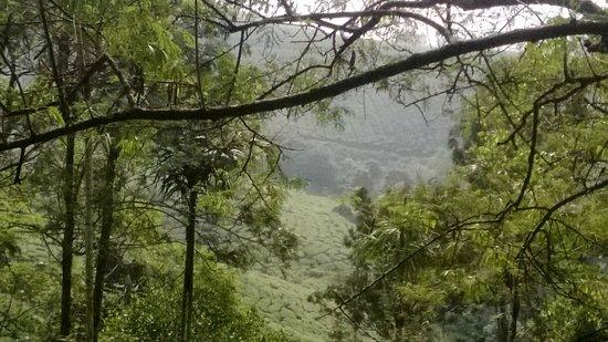 Munnar Hill Cloud