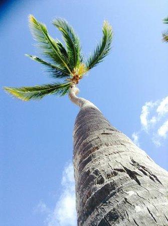 Breathless Punta Cana Resort & Spa: Breathless