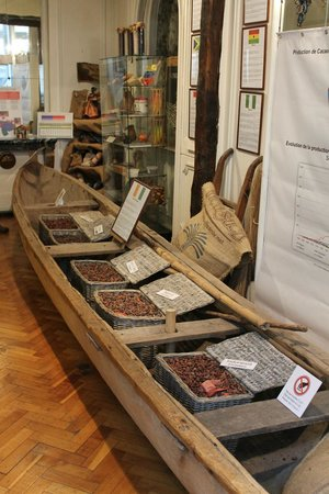 Museum of Cocoa and Chocolate (Musee du Cacao et du Chocolat) : Tipologie di cacao
