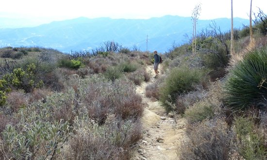 Deukmejian Wilderness Park: husband & dog on the trail