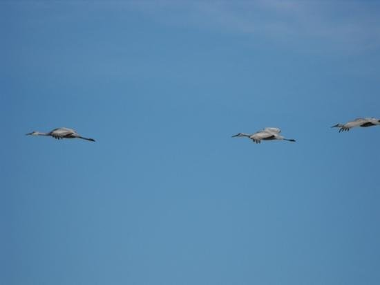 Jasper-Pulaski Fish and Wildlife Area: Beautiful day for a flight