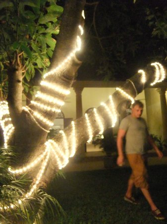 Mango House : mango trees at night