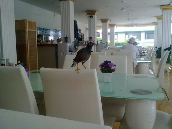 Poppa Palace Hotel Phuket: Это заведение В двух шагах от отеля. Здесь мы обедали и ужинали. Приемлемые цены, приемлемая кух