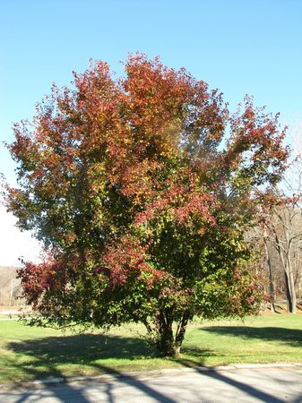 Brown County State Park : One of the fall trees