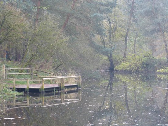 Quarry Bank Mill : Corner of the mill pond