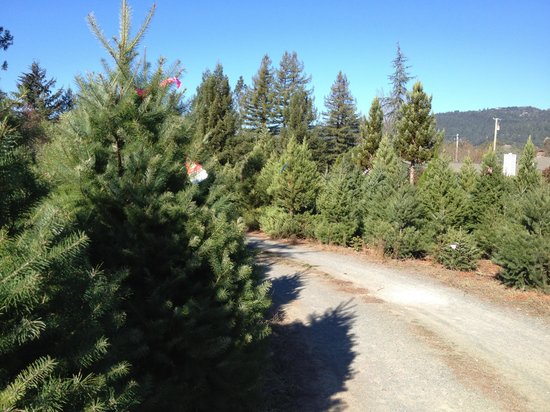 Valley of the Moon Pottery & North Eagle Gallery : Christmas Tree Forrest. Over 10 varieties